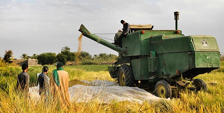 افزایش تنشها درباره محدودیت کشت در خوزستان