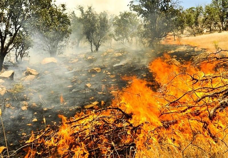بیاحتیاطی گردشگران، جنگلهای دز را به آتش کشید