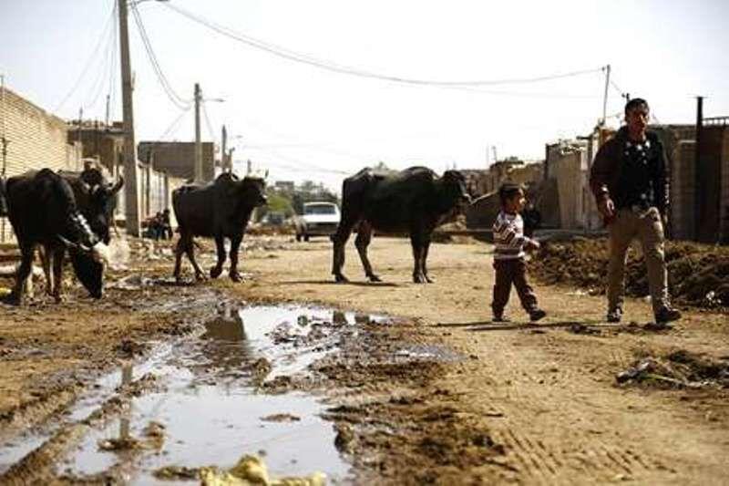 خطر انقراض گاومیشداری در دزفول