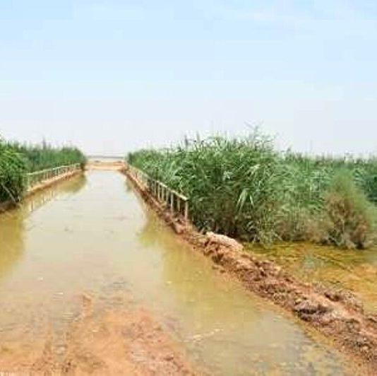 تنش آبی در ۳۵ روستای هویزه در پی طغیان زهکش های کشاورزی