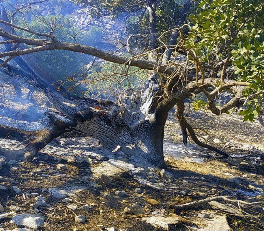 جنگلهای بلوط باغملک در میان شعلههای آتش