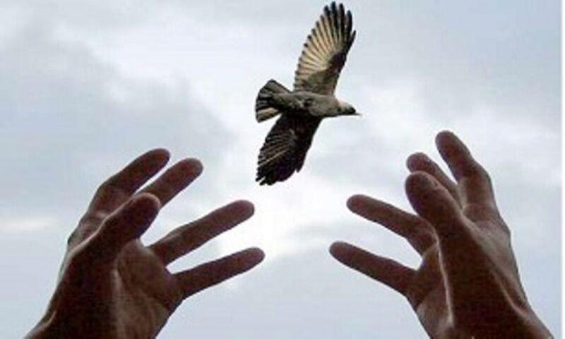 محکوم به قصاص در خوزستان از چوبه دار رها شد